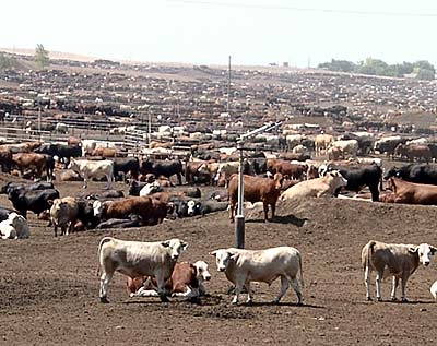 NOT ON MY PLATE: Do You Know Where Your Beef Comes From?