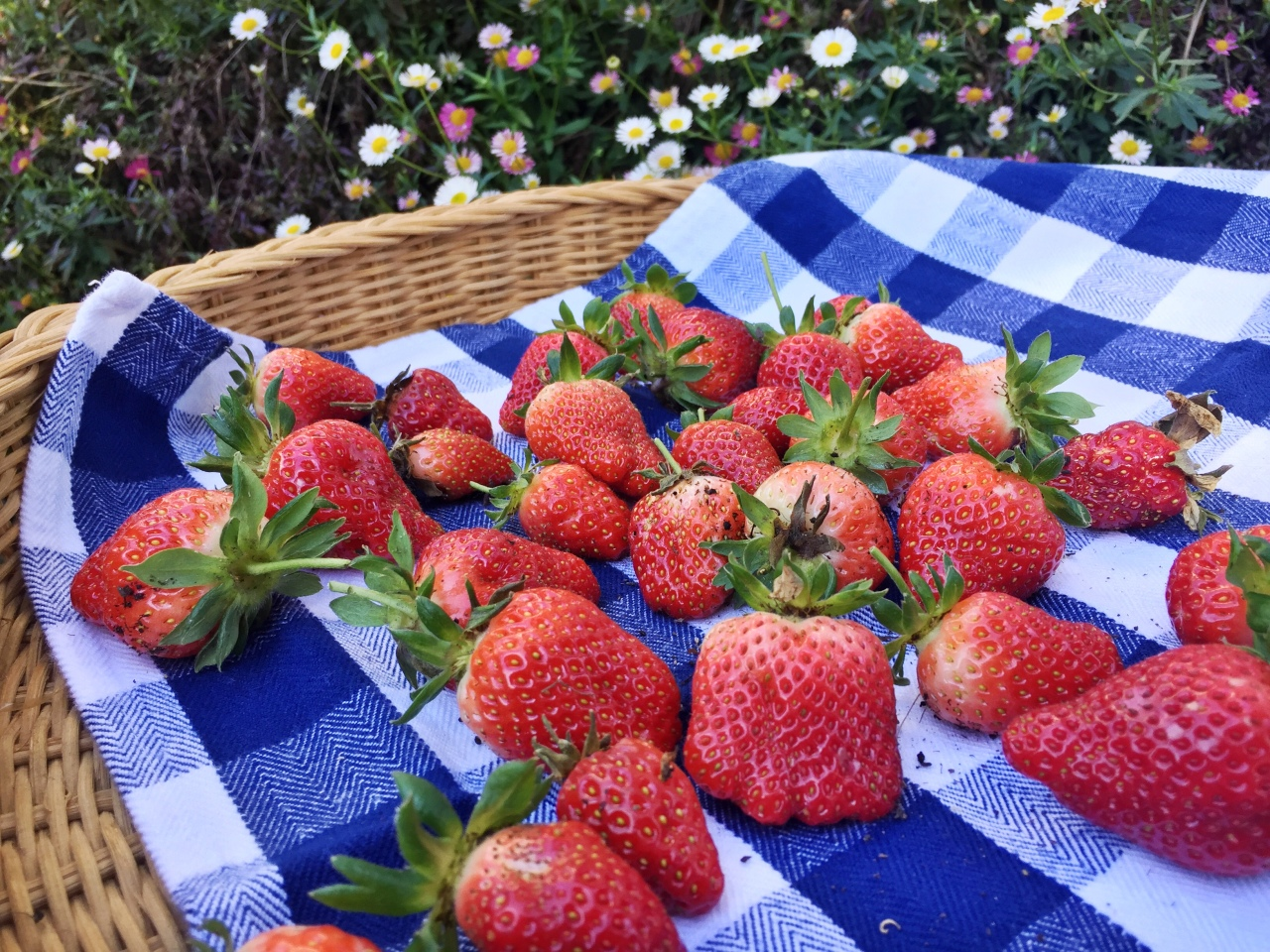 It's Strawberry Season