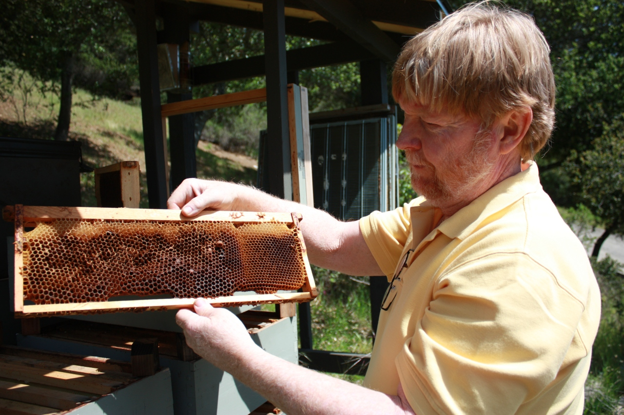 Liquid Gold: A Beekeeper's Story