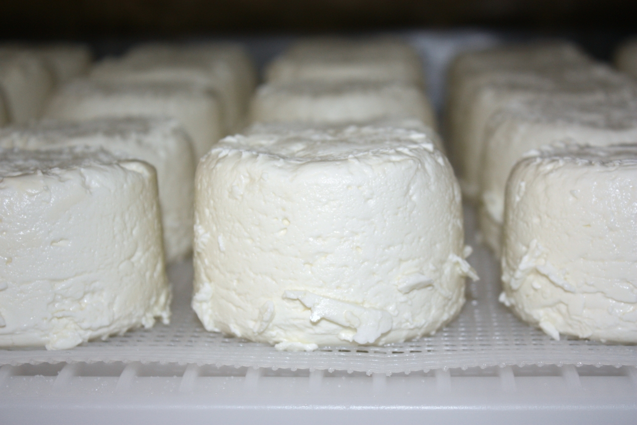 In Search of Cheese Nirvana, Part One: The Nicasio Valley CheeseCompany