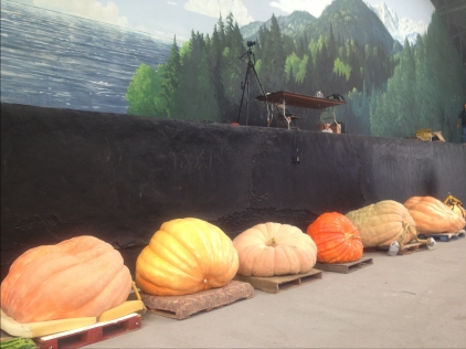 Giant Pumpkin Contest