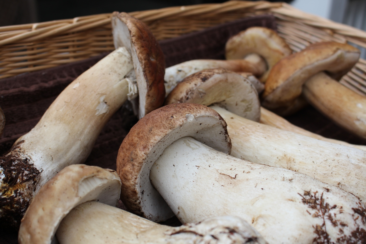 Treasure In the Woods: Foraging for Wild Porcini