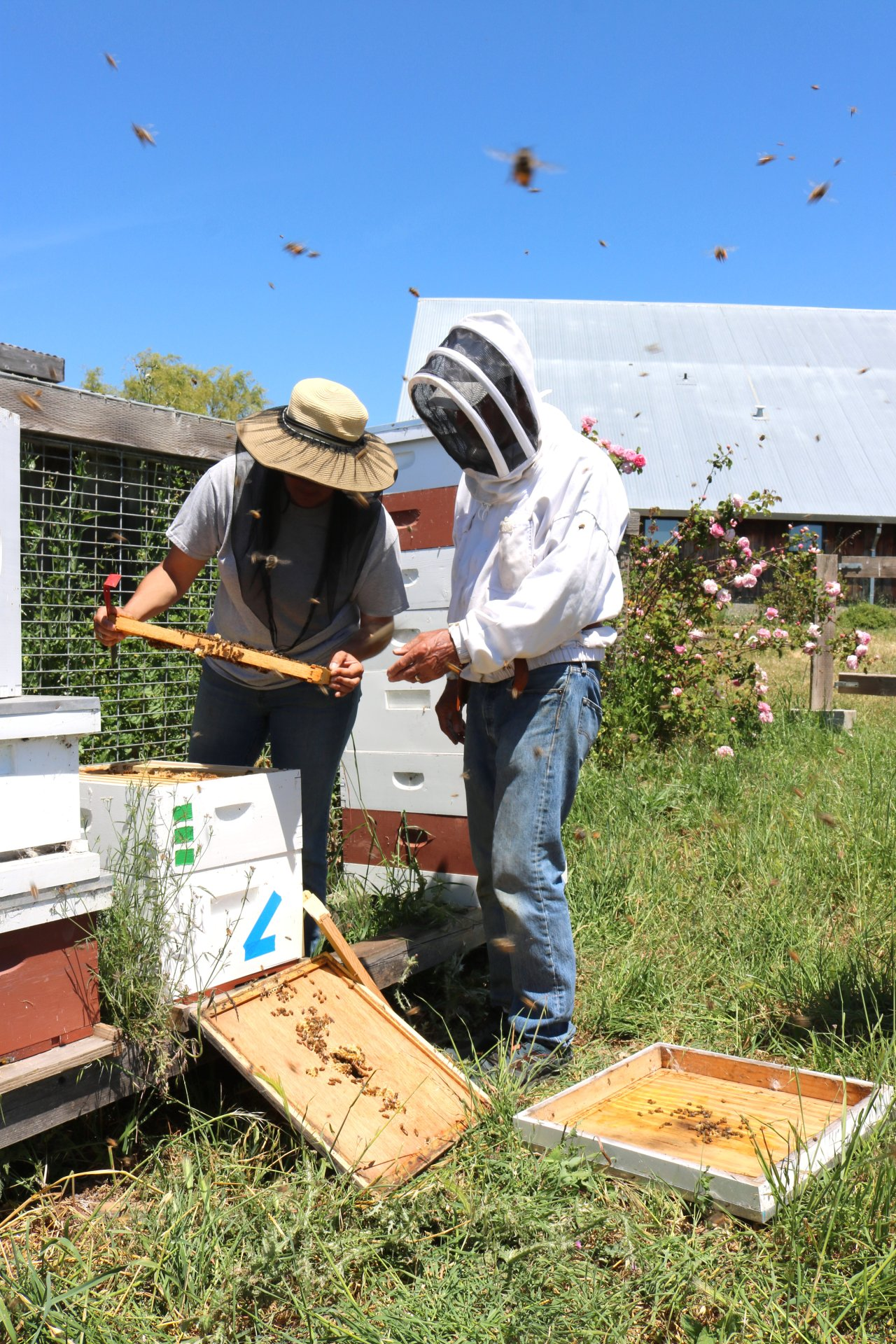Getting Buzzed at Heidrun Meadery: A Flower to Flute Adventure in Beekeeping